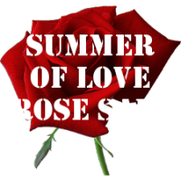 Summer of Love Rose SALE