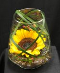 Sunflower In Glass