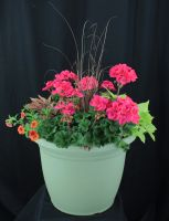 Lowes Large Mixed Annual Planter