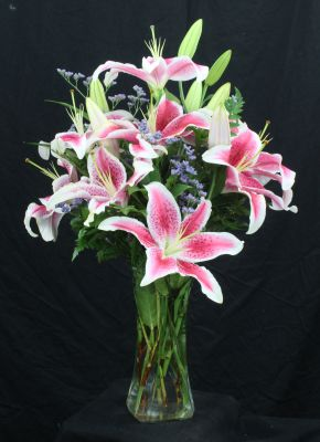 Premium Fragrant Star Gazers