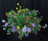 Lowes Medium Sunny Annual Hanging Basket