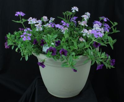 Medium Mixed Sunny Annual Planter