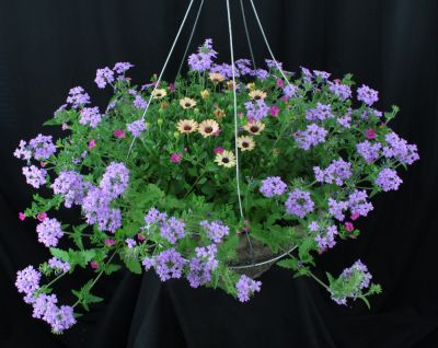 Lowes large sunny annual hanging basket summer flower delivery large sunny mixed hanging basket mightylinksfo