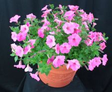 Lowes Single Variety Annual Planter
